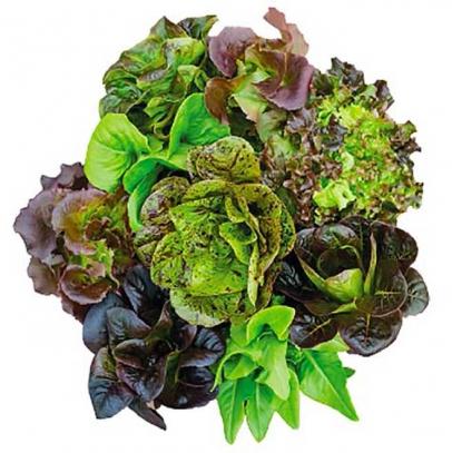 Aquaponic Greens