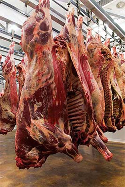 slaughter pigs in warehouse drying out