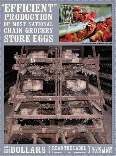 How national chain groceries store egg