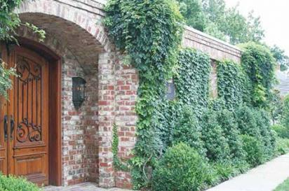 vine covered building with big wooden door