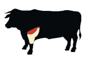beef brisket cow illustration