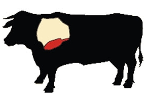 beef chuck cow illustration