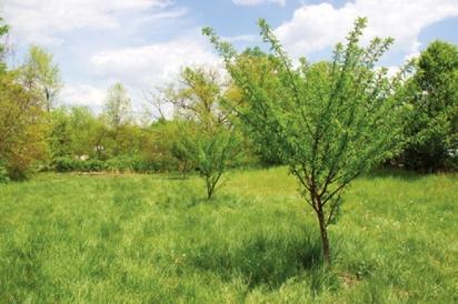 orchard at fern creek high school