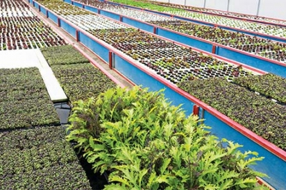 Aquaponic Farms