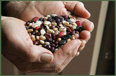 handful of different varieties of dried beans
