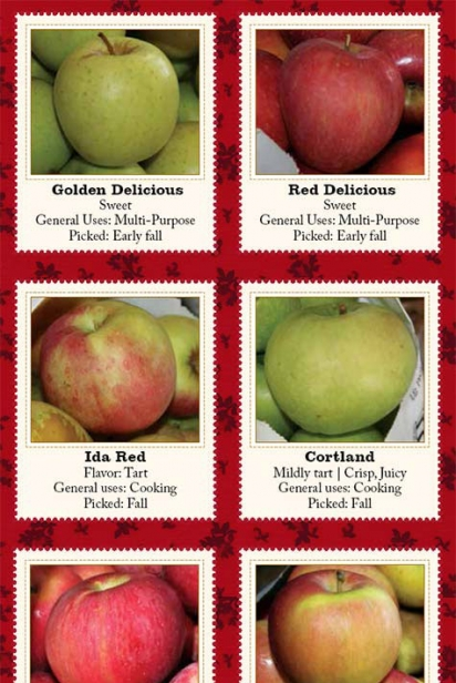 types of apples chart