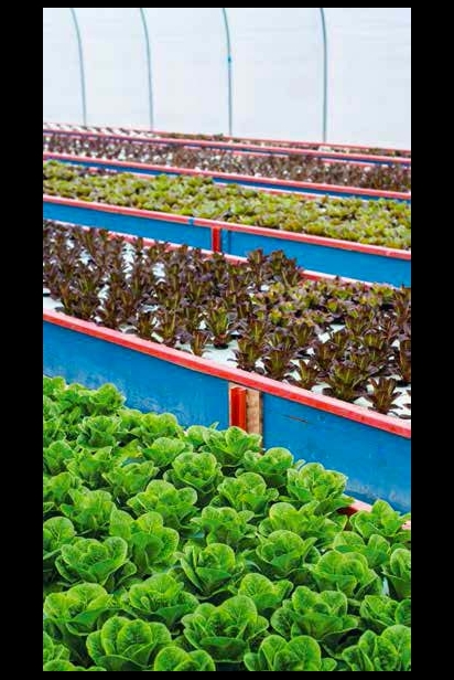 Aquaponic Farms of Groganica Farms