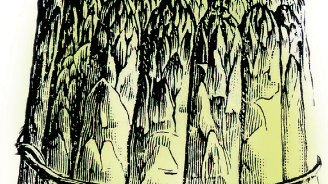 bundle of asparagus illustration